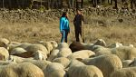Aquí la tierra - Aprendiendo a ser pastor
