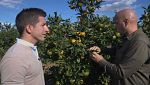 Aquí la tierra- ¿Cómo es una mandarina perfecta?