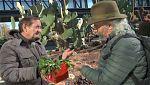 Aquí la tierra - El cactus de la Navidad
