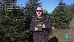 Página 2 - La sugerencia - El Conde de Montecristo y Botánica para bebedores
