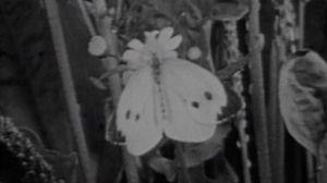 Historia de una mariposa