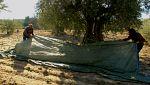 Aquí la tierra - La última oliva