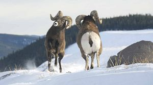 Canadá Salvaje: El salvaje Oeste