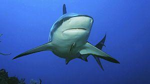 Velocidad Asesina: El océano