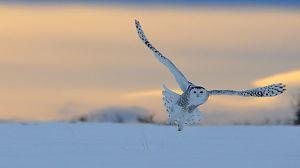 Canadá salvaje: El borde de hielo