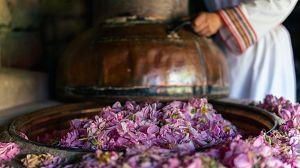 Comida al descubierto: Rosas, cerdo y bolsas para hornear