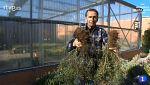 Aquí la tierra - Plantas que se multiplican