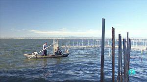 Roberto pescando anguilas en la Albufera