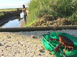 ¡Qué animal! recorre el Delta del Ebro