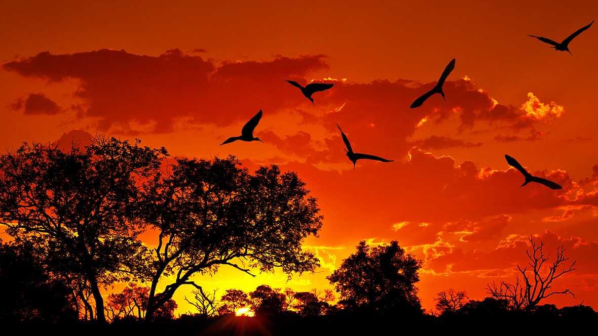 Paraísos cercanos - Suráfrica, el país del arco iris - ver ahora