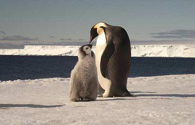 La Unión Internacional para la Conservación de la Naturaleza (UICN) ha presentado  en Copenhague el informe Especies y Cambio Climático que revisa la situación de diez especies emblemáticas para demostrar el impacto del cambio climático en sus hábi