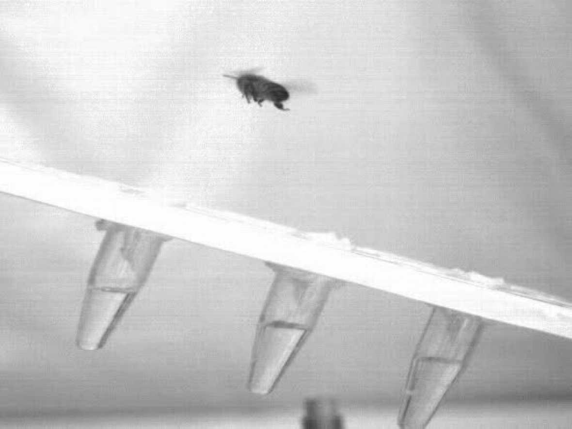 Imagen ralentizada de una abeja posándose