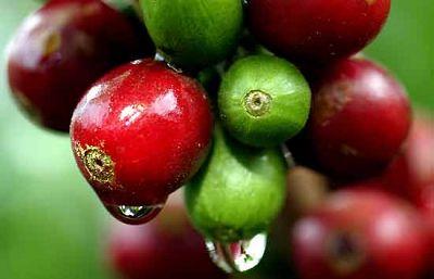 Comercio justo en el café mexicano