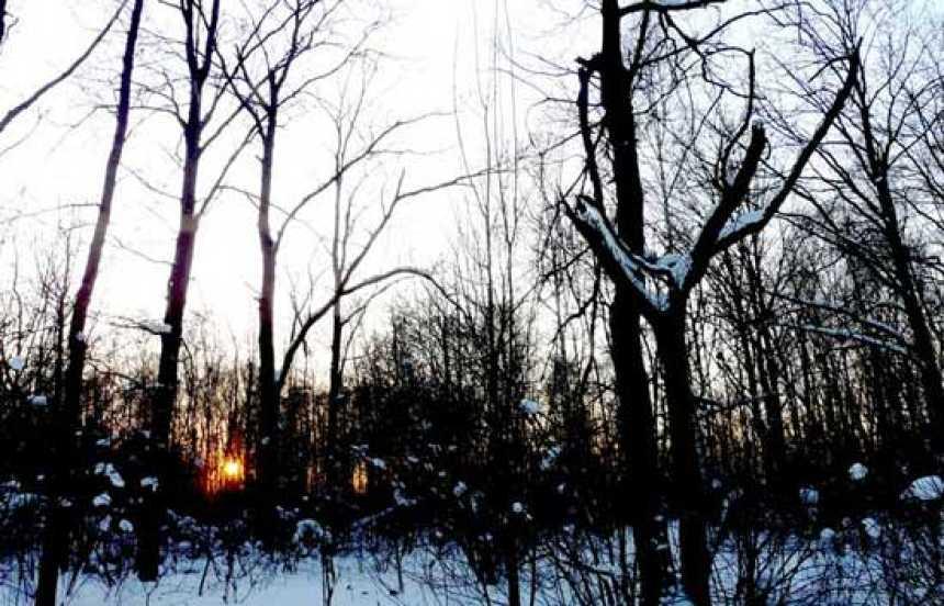 En portada - Las astillas del bosque ruso