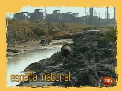 NATURAL:  Recuperar el hábitat para salvar la especie (19/04/10)