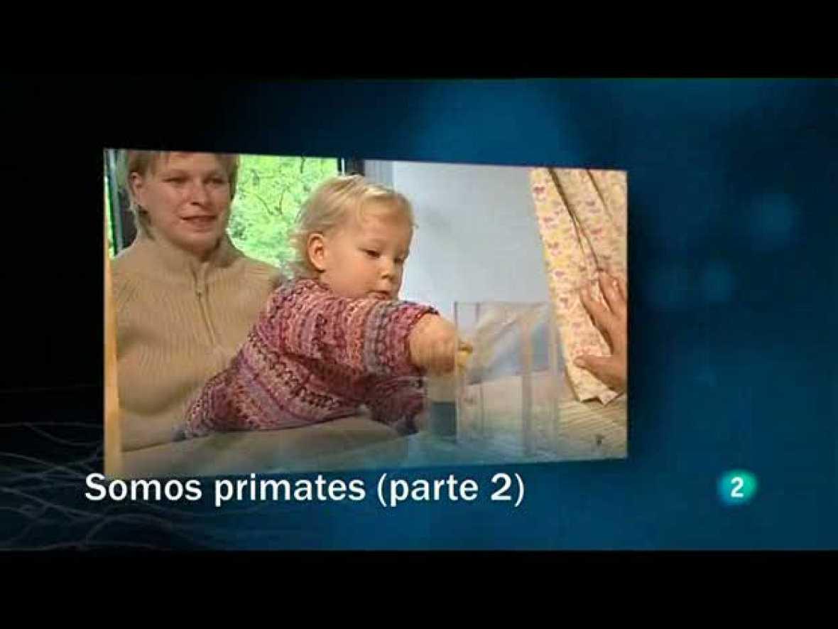 Redes (23/05/10): Somos primates (2ª parte)