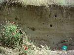 El hombre y la tierra - La epopeya del abejaruco