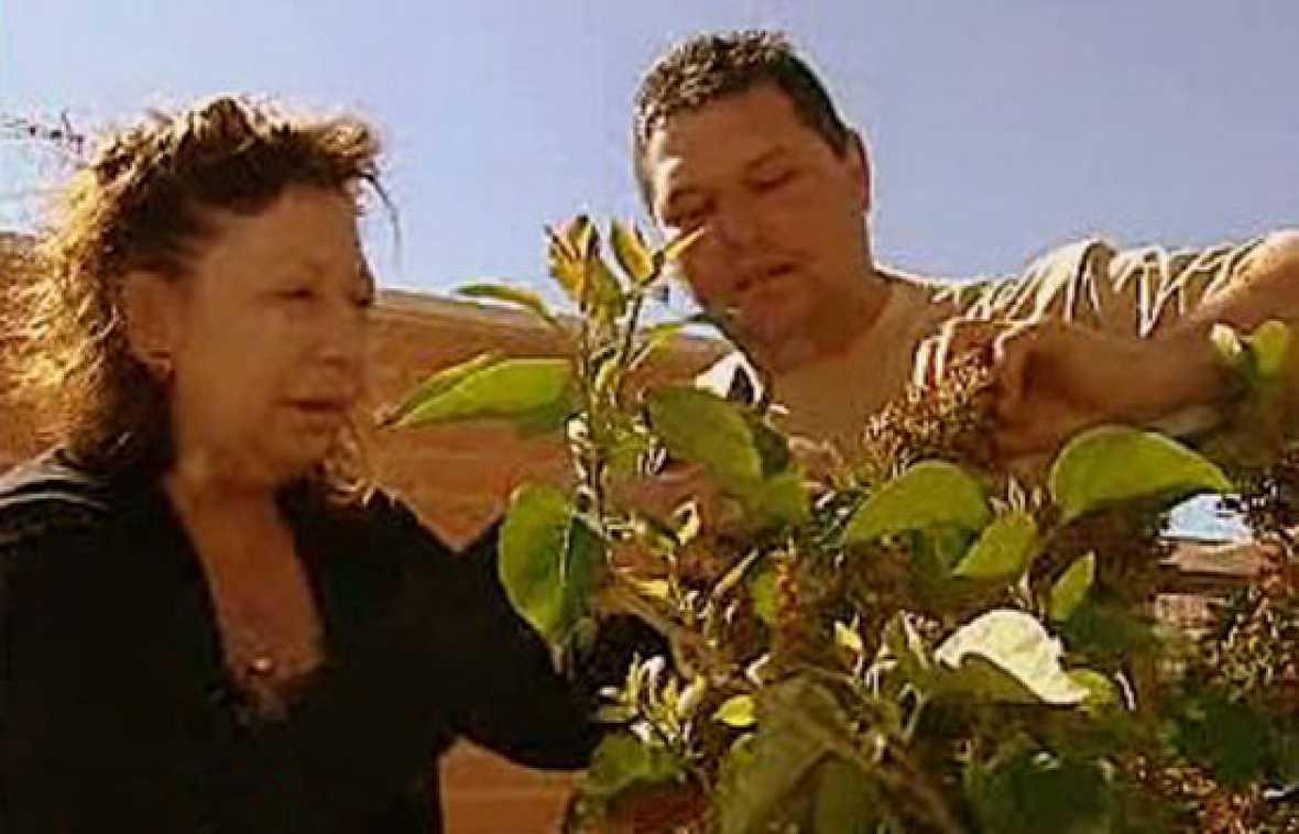 Espa a directo el jardinero en casa for Jardinero en casa
