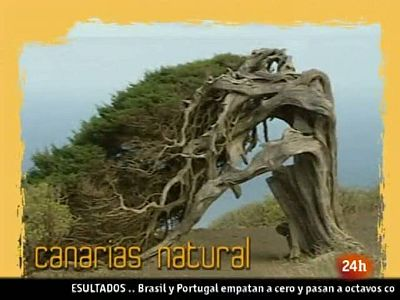 """NATURAL: """"RECICLETA"""" (25/06/10)"""