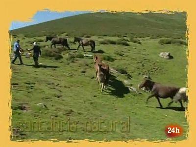 NATURAL: Entre el tránsito y el tráfico de animales. (02/07/10)