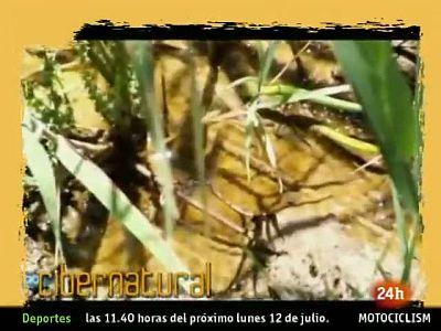 NATURAL: El microcosmos de las Tablas de Daimiel. (09/07/10)