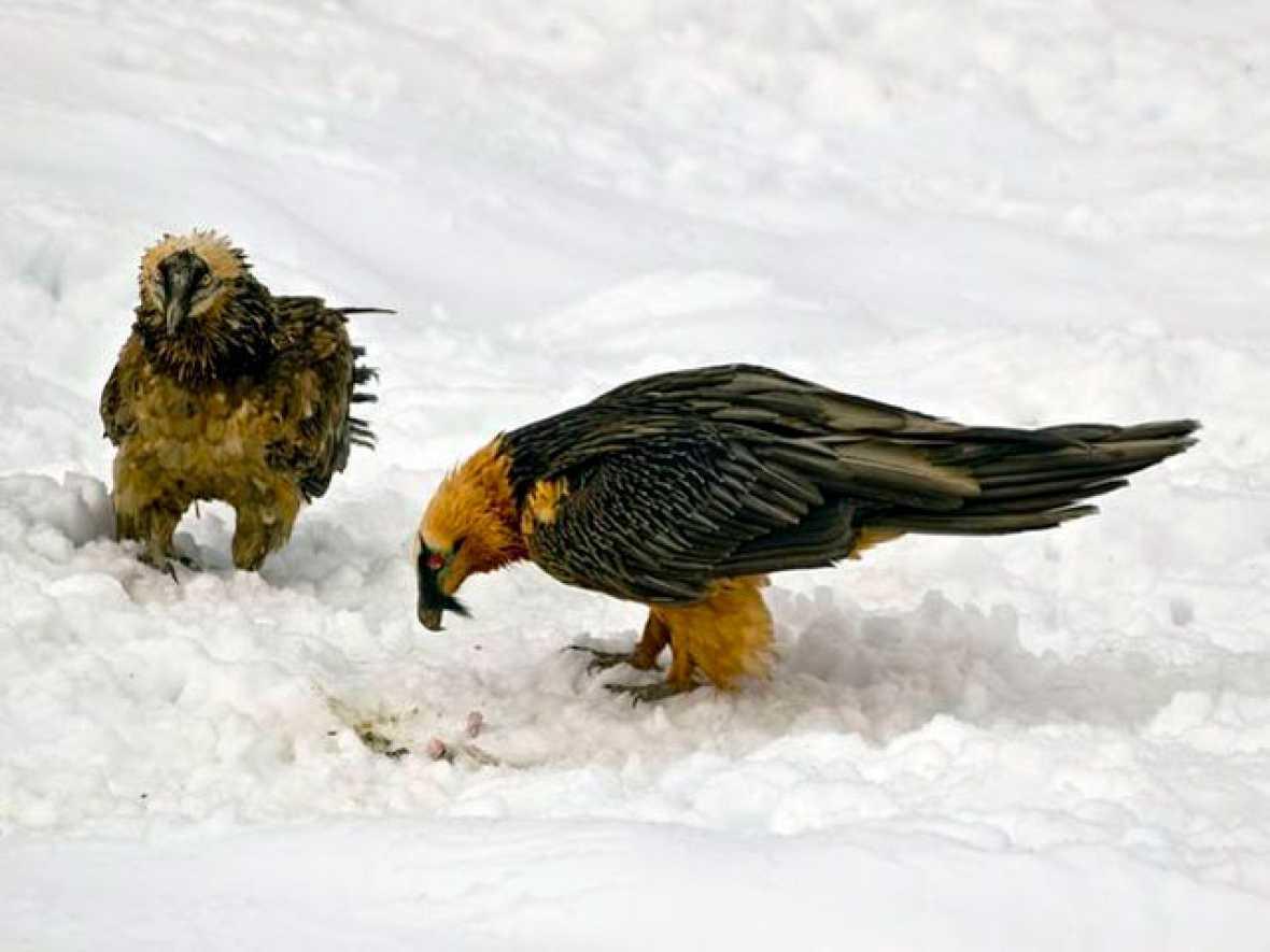 Informe Semanal: El pájaro de barro regresa a los picos