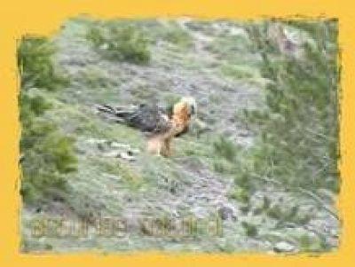 NATURAL: La recuperación de las especies . (19/07/10).