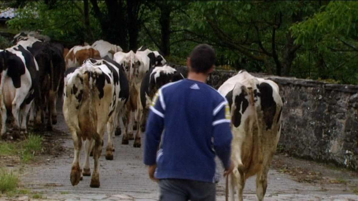 El Escarabajo Verde (01/10/10): Vendo una vaca lechera
