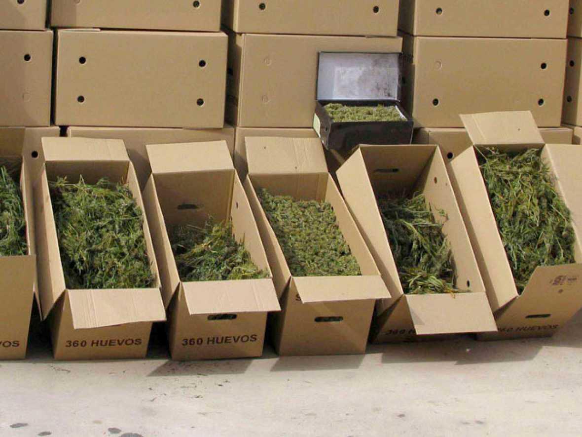 La marihuana, más persecución y venta legal